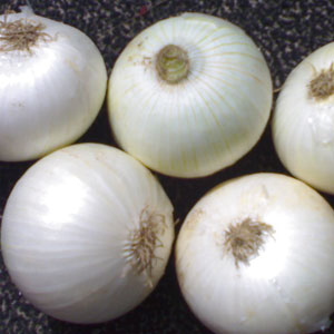 50-to-60-mm-Fresh-white-onion