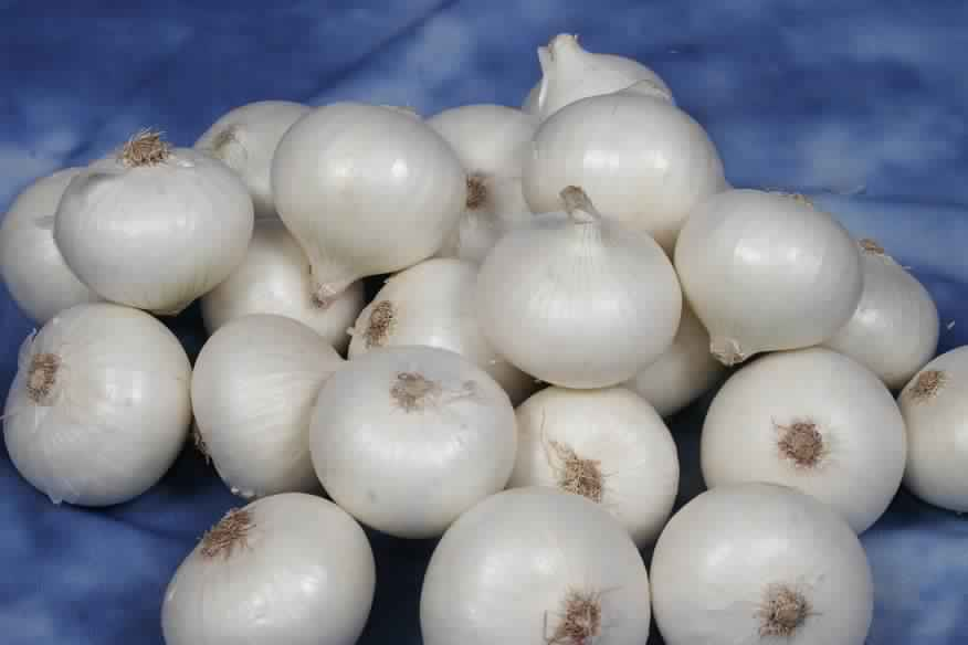 fresh-white-onion (1)